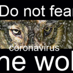 Don't fear the coronavirus wolf, by Bruce Brown