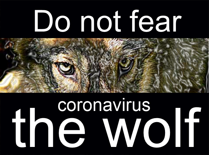Do not fear the coronavirus wolf, by Bruce Brown