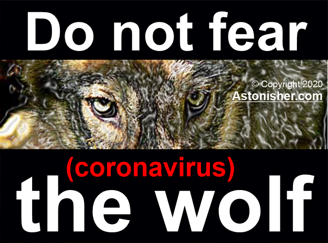 Do not fear the (coronavirus) wolf, by Bruce Brown